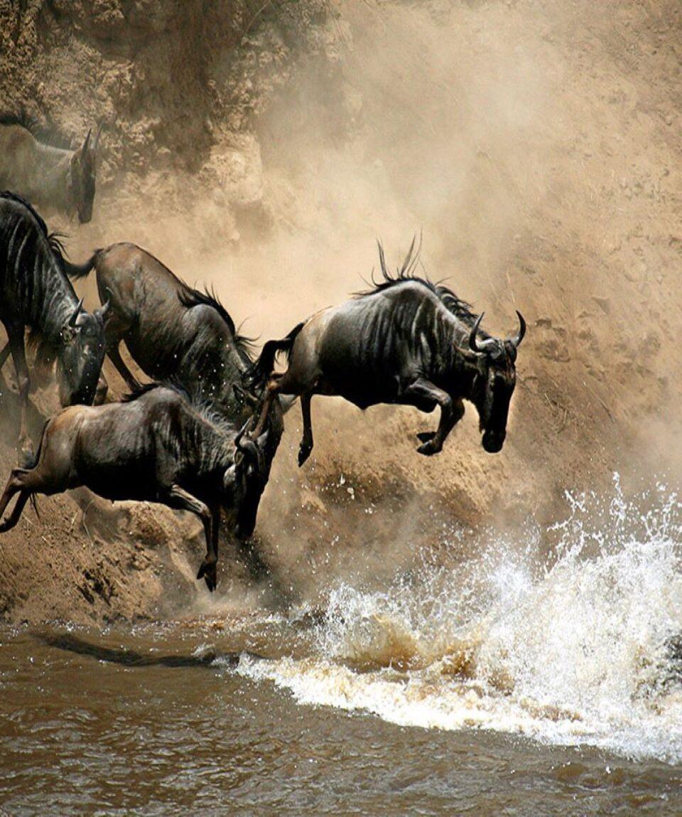 1-slide-wildebeest-kenya-masao-mara-nationa-game-reserve-pano-1