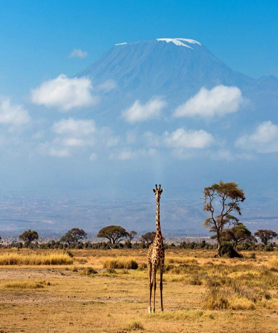 Amboseli-1