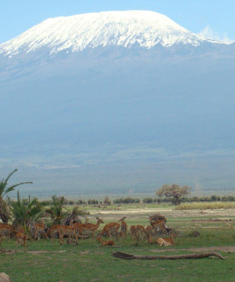 Gazelle against Kilimanjaro_1