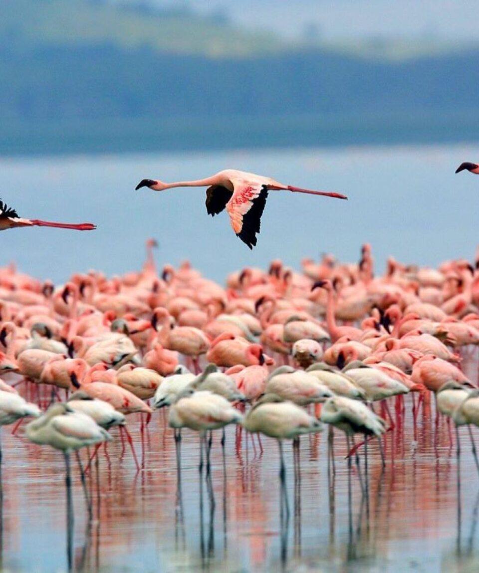 Lake-Nakuru-National-Park 1