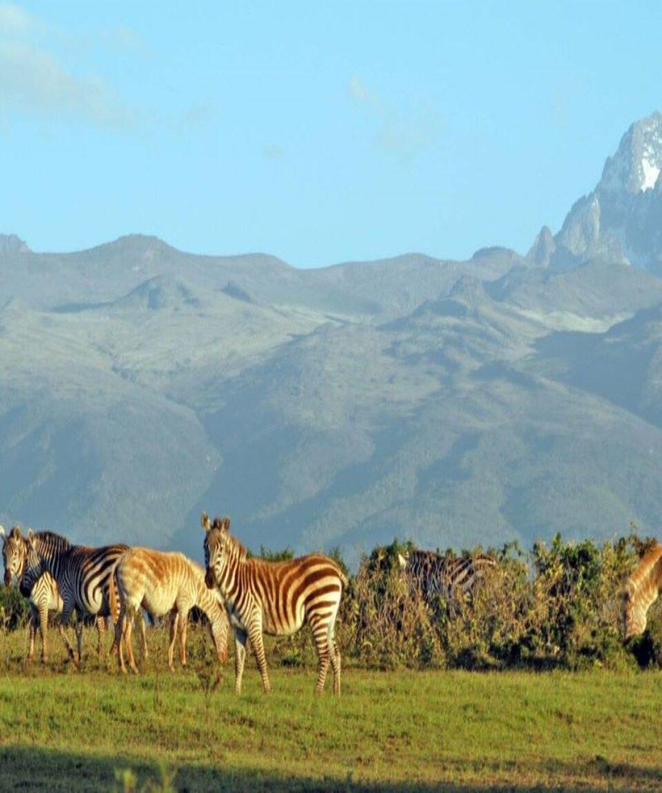 Mount-Kenya-National-Park 1