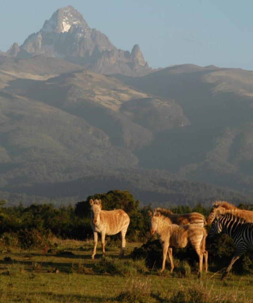 Mount-Kenya-National-Park-Safaris