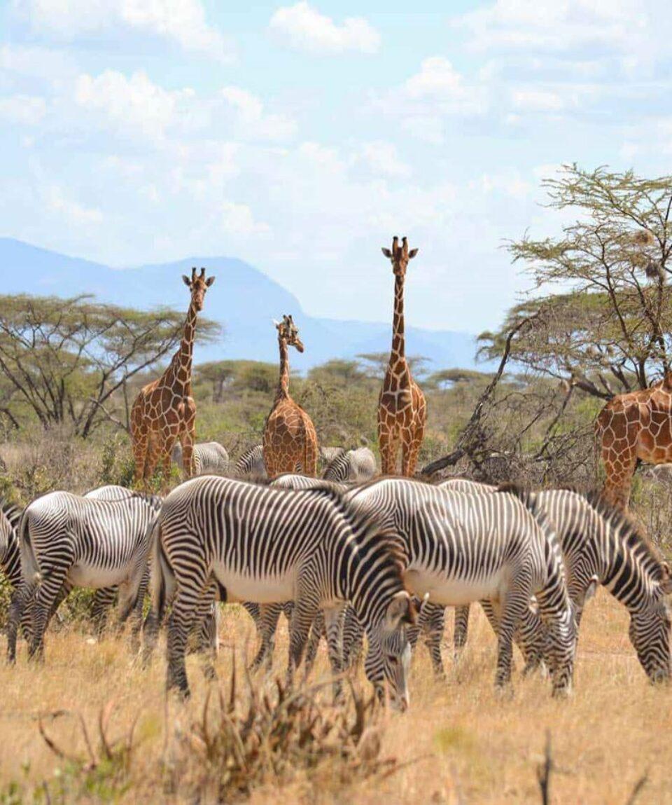 Samburu-National-Park