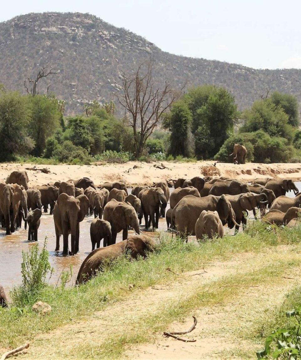 rsz_samburu_national_reserve