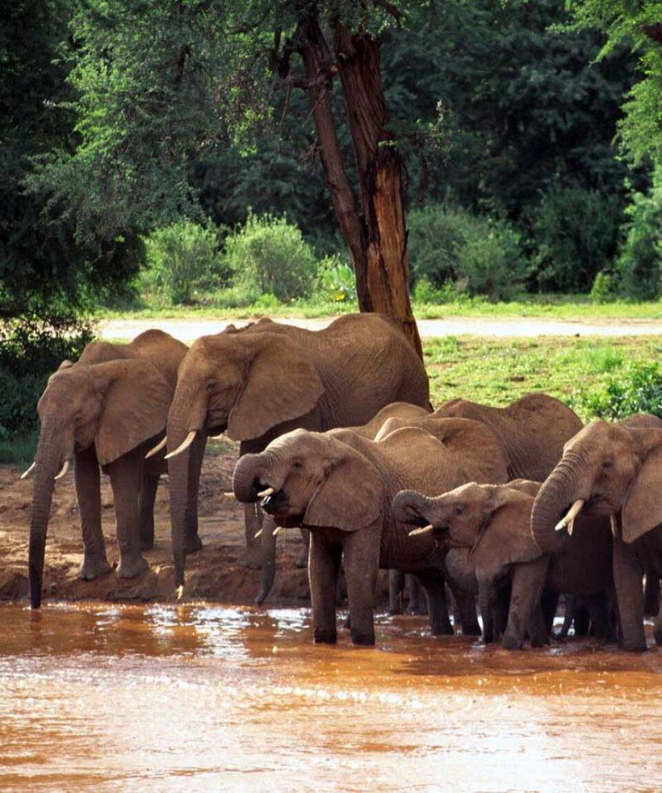 samburu-elefanten
